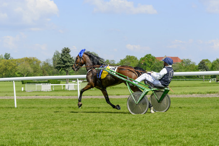 meta: Finish the race for 3-year-old and older trotting French (sulki) on 8 May 2016 in Wroclaw, Poland. This is an annual race on the track Partenice open to the public.