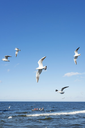 White seagulls flying in the sky over the Baltic sea.