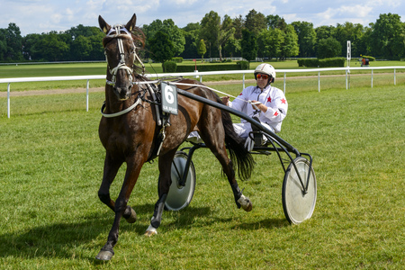 Vocean horse on the race for 8-year-old and older trotting French on June 18, 2017 in Wroclaw, Poland. This is an annual race on the Partynice track open to the public.