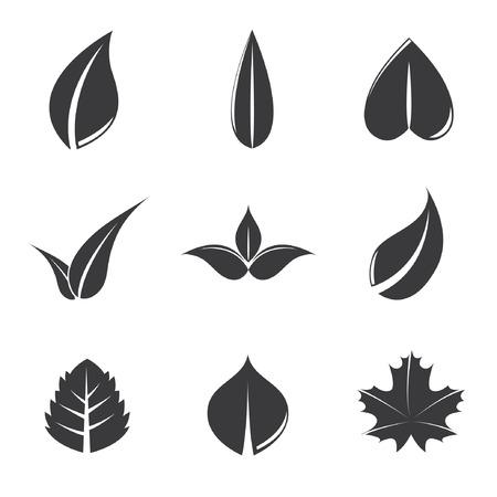 vegetate: leaves Illustration