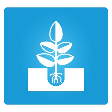 seed plant: seed, plant