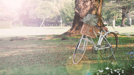 Vintage bike or bicycle and brown color wooden basket in the front and little white color flowers inside and national park background in the day time lighting which shown relaxation mood tone.