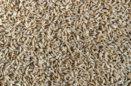 spelt: Spelt wheat cereal background. Healthy lifestyle concept.