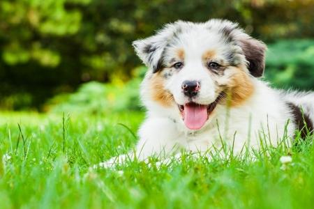 Jonge puppy liggend op vers groen gras in het openbaar park Stockfoto