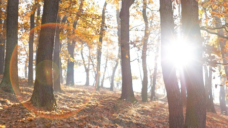 View of forest nature with sun and flares