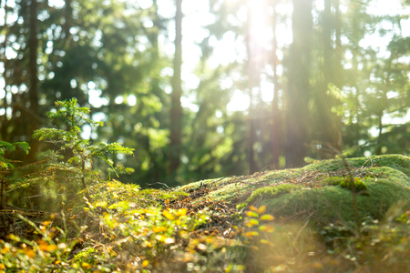 A down-low look at the tranquil forest, leaves and spider webs slowly moving in the wind