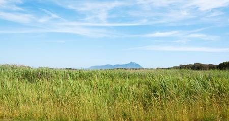 felice: meadow with the backdrop of San Felice Circeo Latina