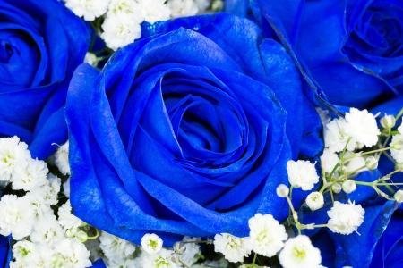 blauwe rozen Stockfoto