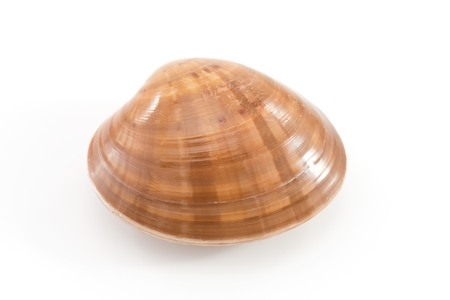 cockles: cockles
