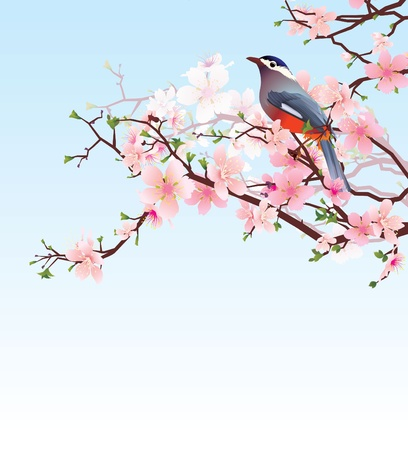 blossoming cherry tree with beautiful bird Vector