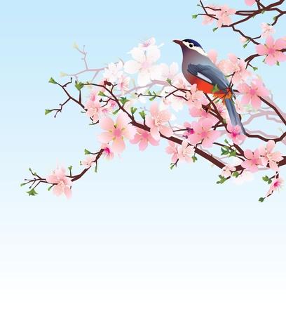 fleur cerisier: floraison cherry tree avec bel oiseau