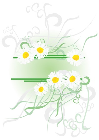 vector daisies with green decor isolated on white photo