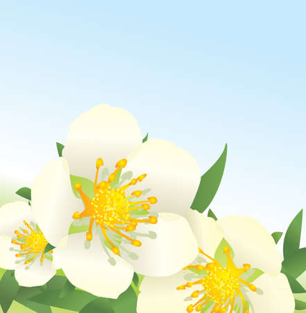 white wild roses flowers on blue sky background photo