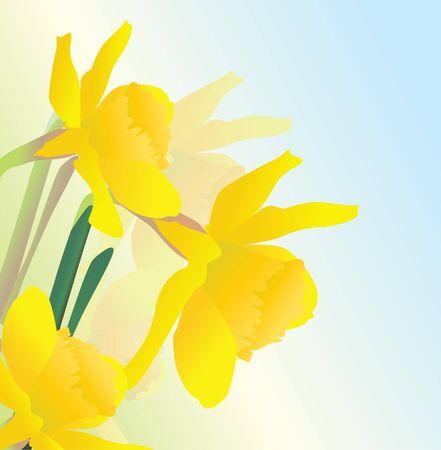 yellow spring daffodil flowers vectpor realistic illustration Stock Illustration - 13489836