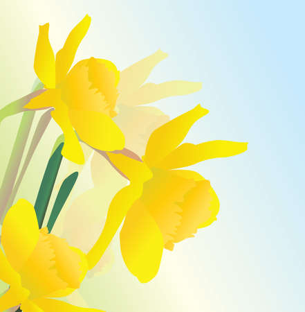 yellow spring daffodil flowers vectpor realistic illustration Stock Illustration - 13489962