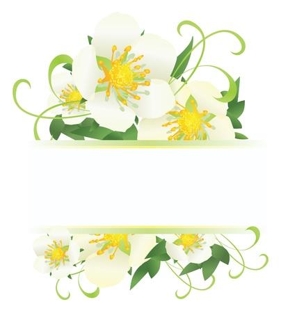 white wild roses bannervector decor illustration Stock Photo