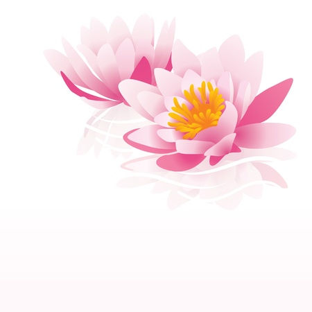 lirio acuatico: agua lirio rosa ilustraci�n vectorial sobre fondo blanco