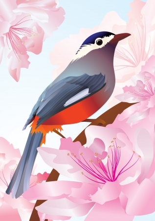 vector bird in spring flowers pink blossom photo