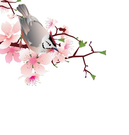 japanese garden: sprung  bird on blossom cherry tree branch, japan style sakura