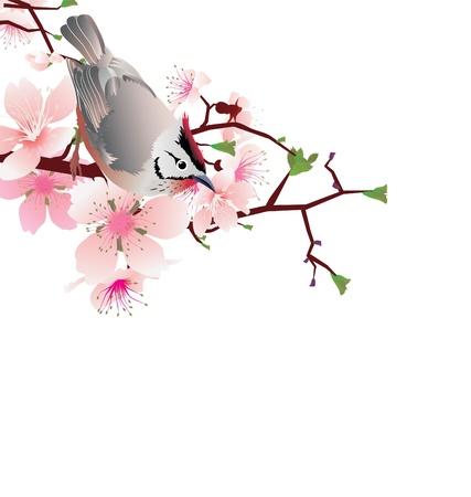 sprung: sprung  bird on blossom cherry tree branch, japan style sakura