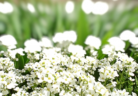 white flowers and green grass photo