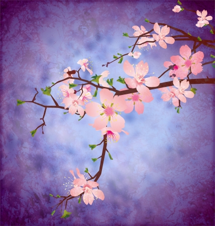japanese garden: blossom cherry tree brunch on grunge blue square vintage background  high detailed