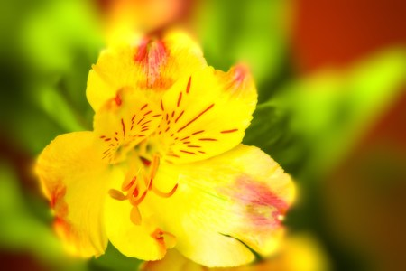 Yellow colored flower  photo