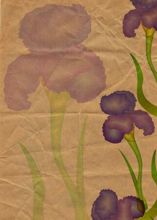 illustraton: flowers illustraton old textured paper yellow tint