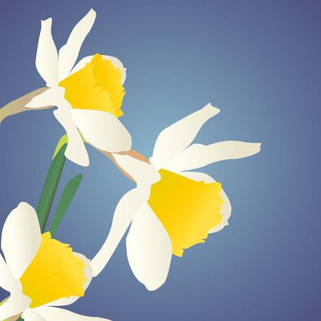 jonquil: white daffodils on dark blue background Illustration