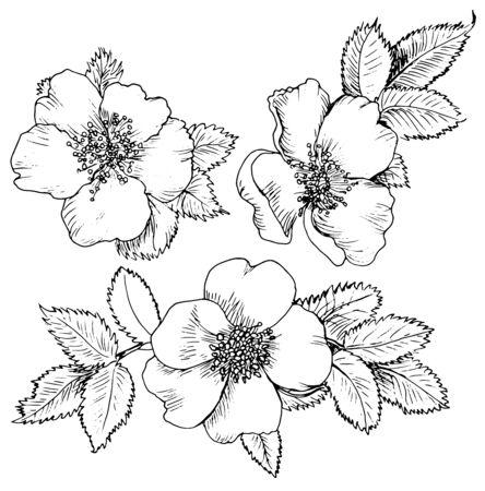 dogrose hand drawn flowers