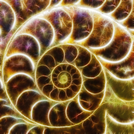 ammonite shell form fractal abstract background illustration