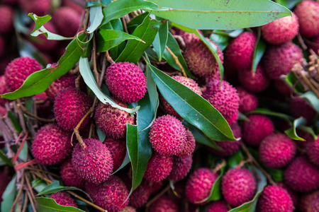 tropical fruits: Lychees,Tropical Fruits,thailand,south of asia