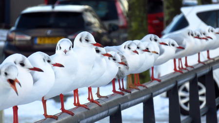 Seagulls Sitting on a Snow Covered Bridge in Residential Area