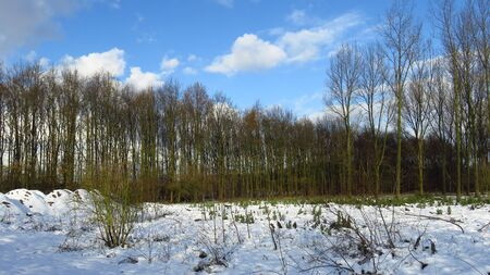 Bare Forest Covered in Snow During Winter Stock Photo