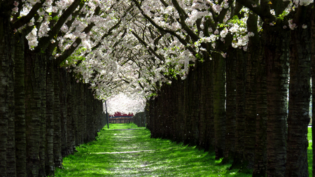 Green Path Lined With Pink and White Spring-Blooming Trees Stockfoto