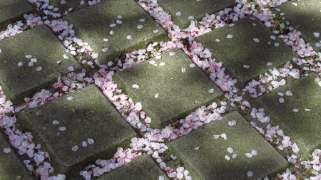 Pavement Covered in Pink and White Blossoms