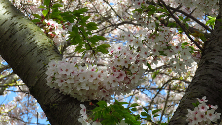 Pink and White Blossom on Blooming Trees