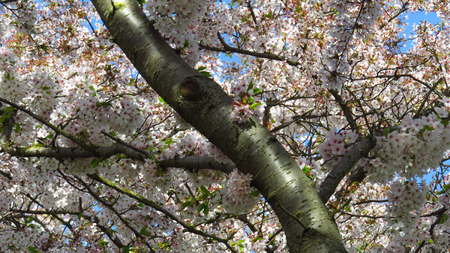 Pink and White Blossom on Spring-Blooming Trees