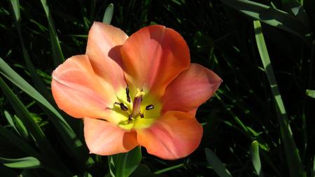 Red Flower Blooming During Spring Stockfoto