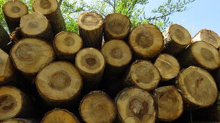 Wood Logs In Large Woodpile Against Blue Sky