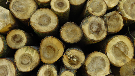 Wood Logs In Large Woodpile for Background