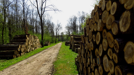 Wood Logs In Large Woodpiles Along Forest Pathway Stockfoto
