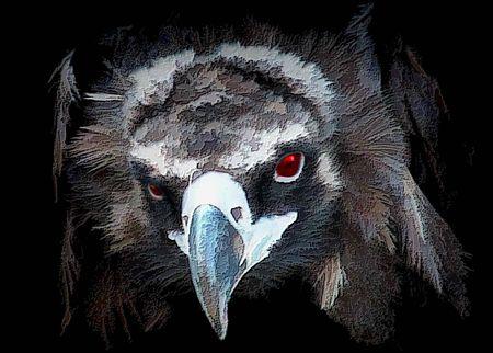 Eagle eye photo
