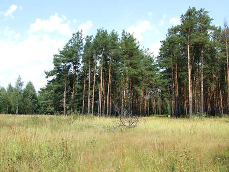 boron: Pine boron 1