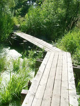 gangway: Gangway on by the swamp