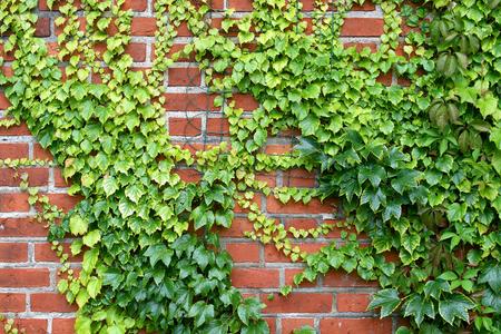 ブドウの壁