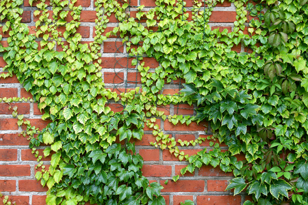 Wall with the grapes  Standard-Bild