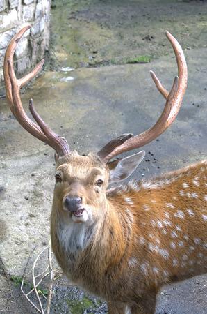 spotty: Spotty deer