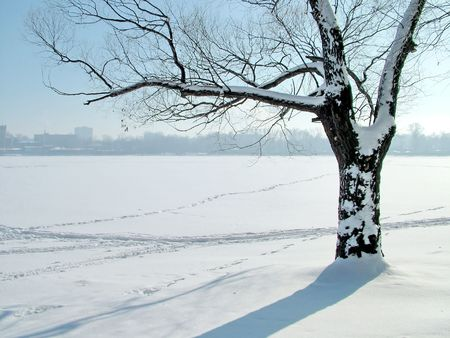 Tree on the shore of the icy lake photo