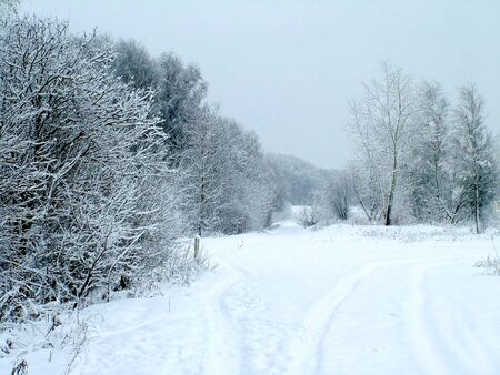 Road in the winter forest Stock Photo - 2021603